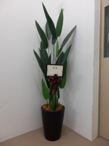 造花ストレルチア